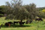 La Comisión de Medio Ambiente de la Asamblea aprueba una PNL de apoyo a la ganadería extensiva