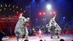 Pedimos al Ayuntamiento de Leganés prohibir expresamente los circos con animales