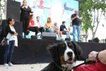 Más Madrid comprometido con los animales